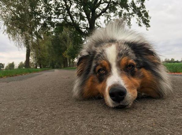Hund liegt auf der Stra0e